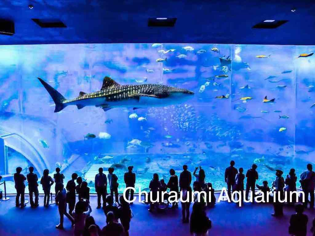 1 Day Northern Okinawa & Churaumi Aquarium 1