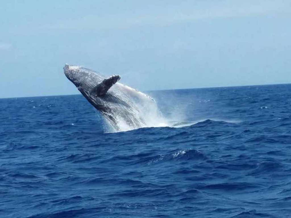 Okinawa Whale Watching in Winter 3