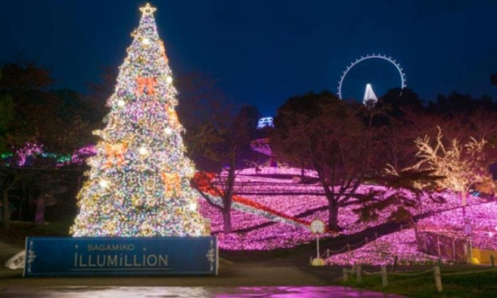 Cahaya Iluminasi Indah di Jepang & Pemandangan Gunung Fuji