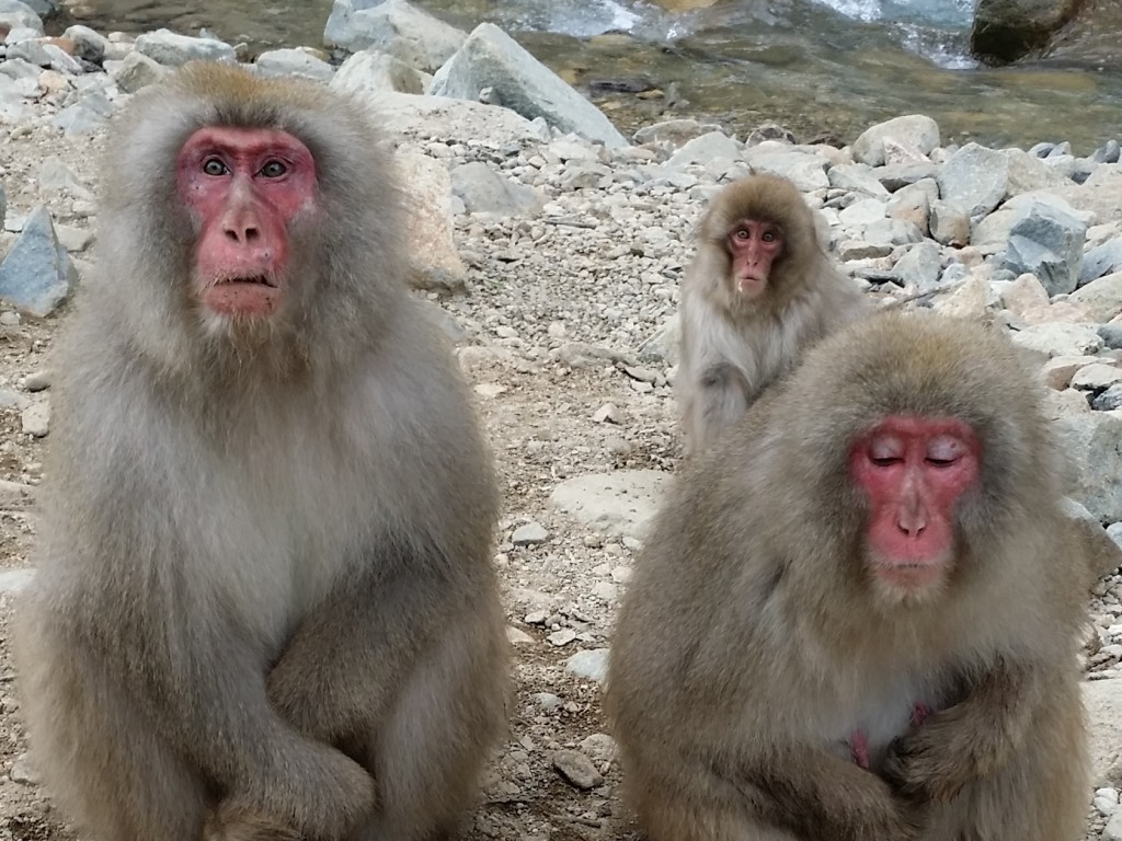Day Trip to see Monkey Bath in Hotspring 2