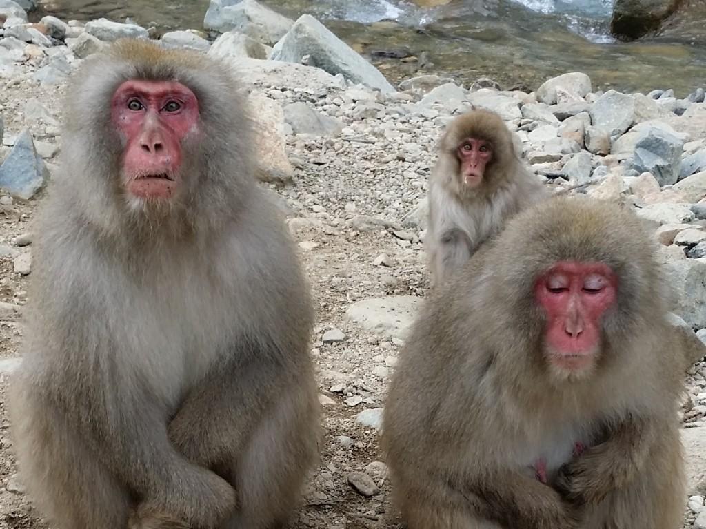 Trip Melihat Monyet Salju Mandi di Pemandian Alam 2