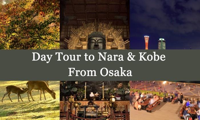 Melihat Rusa di Taman Nara & Kobe 1 Hari dari Osaka