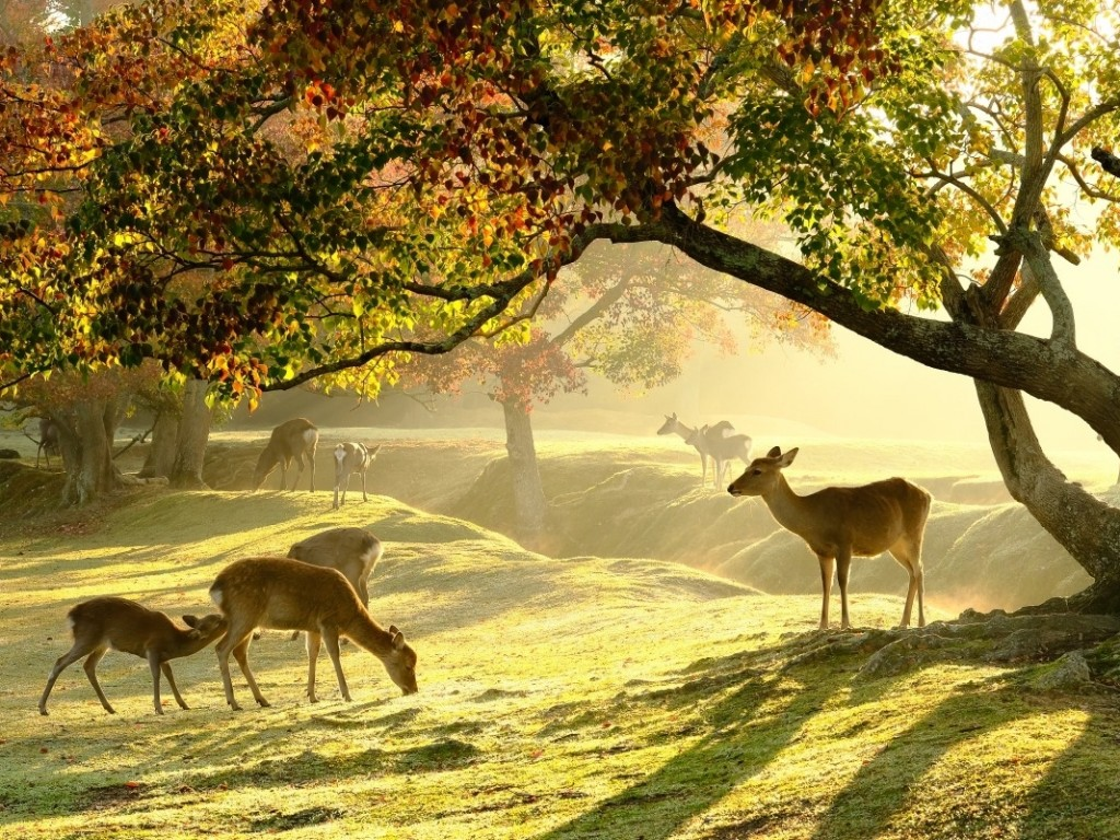 See Deer in Nara Park & Kobe Day Trip from Osaka 0