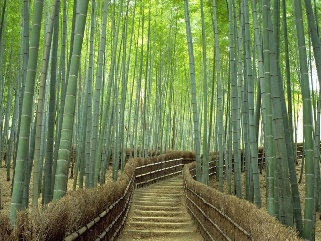 Day Tour to Kyoto from Osaka with Sagano Romantic Train 2