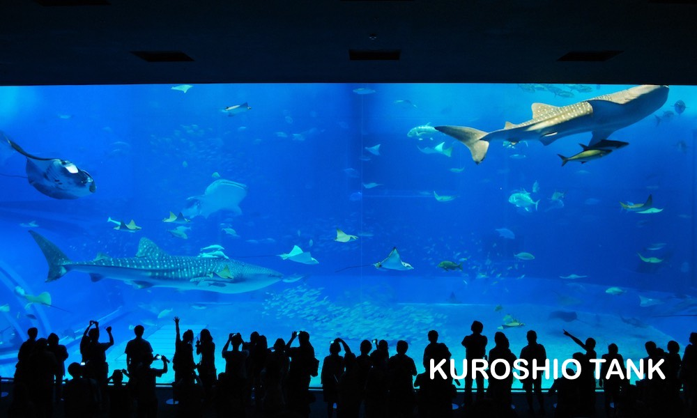 Churaumi Aquarium 0