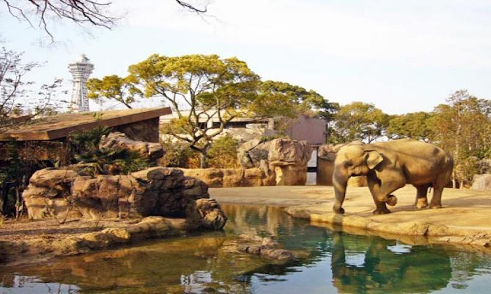 Shinsekai Tennoji Zoo 1
